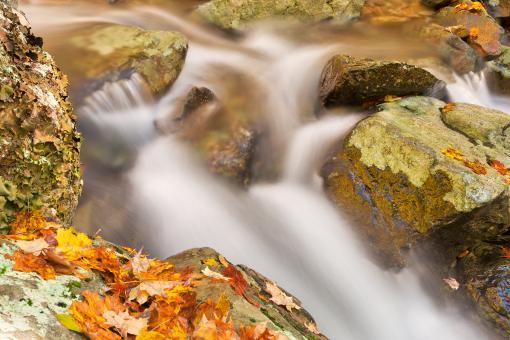 Free Stock Photo of Autumn Rose River Stream - HDR