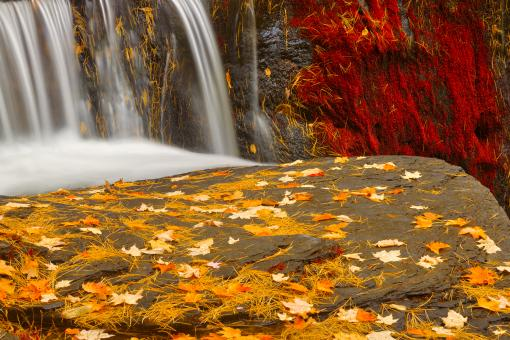 Free Stock Photo of Autumn Moss Factory Falls - Gold Ruby Fantasy HDR