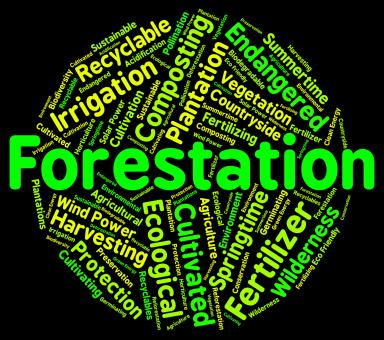 Free Stock Photo of Forestation Word Shows Woodlands Woods And Trees