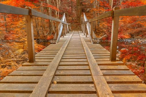 Free Stock Photo of Autumn Forest Track Bridge - HDR