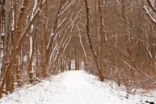 Free Stock Photo of Winter Forest Tipi Trail