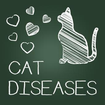 Free Stock Photo of Cat Diseases Indicates Puss Kitten And Kitty