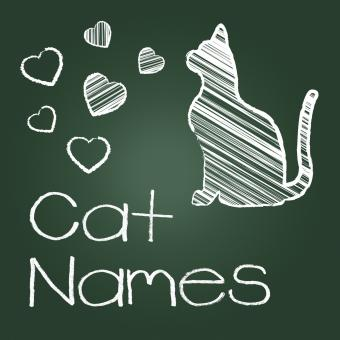 Free Stock Photo of Cat Names Represents Feline Identity And Cats