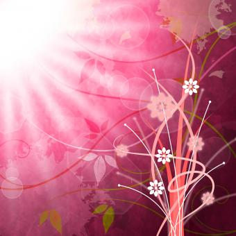Free Stock Photo of Sun Rays Means Flower Flowers And Pink