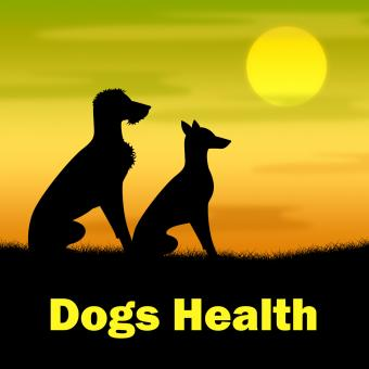 Free Stock Photo of Dogs Health Shows Puppies Canines And Landscape