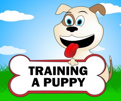 Free Stock Photo of Training A Puppy Represents Trainer Instruction And Coach