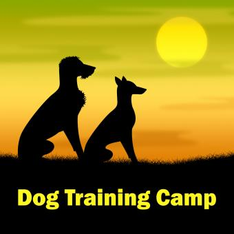 Free Stock Photo of Dog Training Camp Means Coach Pups And Doggy