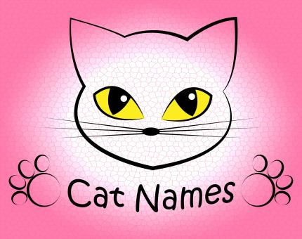 Free Stock Photo of Cat Names Represents Kitty Pets And Feline