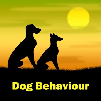 Free Stock Photo of Dog Behaviour Means Actions Landscape And Pup
