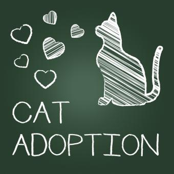 Free Stock Photo of Cat Adoption Shows Kitten Pet And Adopting