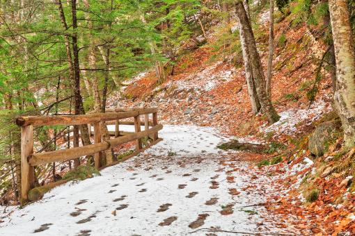 Free Stock Photo of Sabbaday Winter Forest Trail - HDR