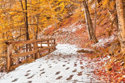 Free Stock Photo of Sabbaday Winter Forest Trail - Amber Gold Fantasy HDR