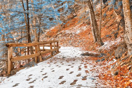 Free Stock Photo of Sabbaday Winter Forest Trail - Amber Sapphire Fantasy HDR