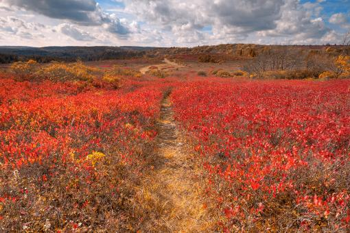 Free Stock Photo of Dolly Sods Huckleberry Trail - Indian Summer HDR