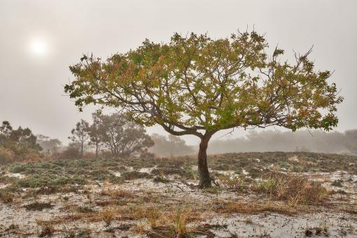 Free Stock Photo of Glowing Mist of Assateague Island - HDR