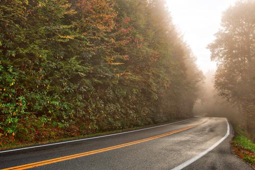 Free Stock Photo of Slick Mist Forest Road - HDR