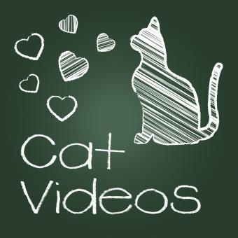 Free Stock Photo of Cat Videos Represents Audio Visual And Cats