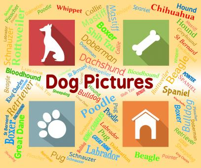 Free Stock Photo of Dog Pictures Means Pets Pups And Words