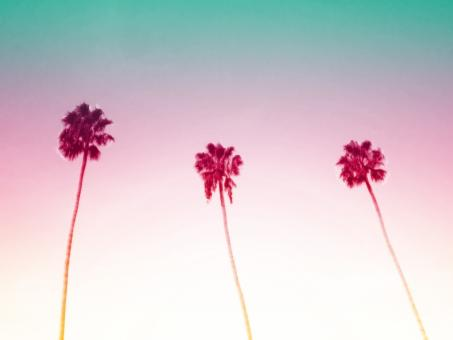 Free Stock Photo of Three Palm Trees