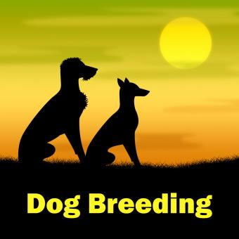 Free Stock Photo of Dog Breeding Means Puppies Puppy And Darkness