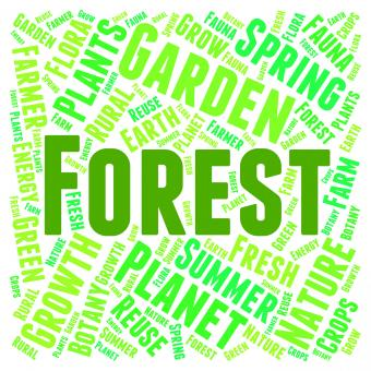 Free Stock Photo of Forest Word Means Trees Copice And Park