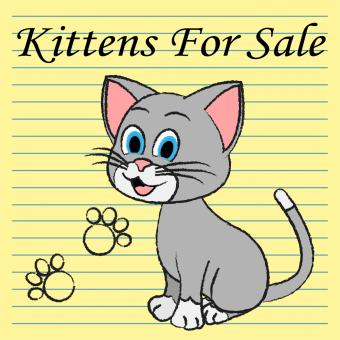 Free Stock Photo of Kittens For Sale Shows Cats On Market And Advertisement