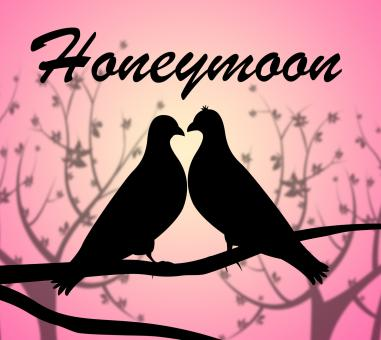 Free Stock Photo of Honeymoon Doves Means Love Birds And Break