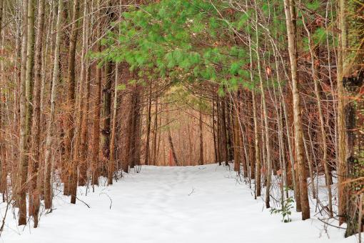 Free Stock Photo of North Point Winter Pine Trail - HDR