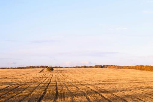 Free Stock Photo of Newly cut autumn wheat field in a village in Moldova