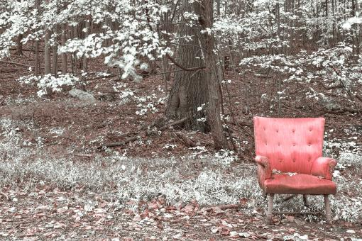 Free Stock Photo of Abandoned Forest Comfort - Pink Winter Punch HDR