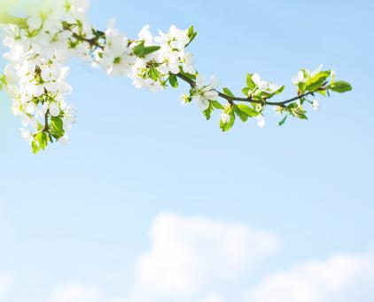 Free Stock Photo of Branch with Spring Flowers