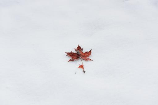 Free Stock Photo of Winter Leaf