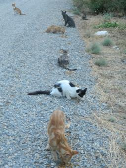 Free Stock Photo of Stray Cats