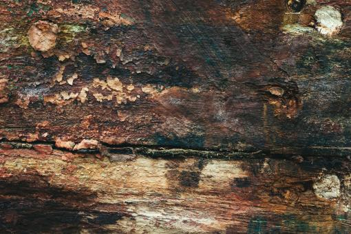 Free Stock Photo of Grungy Wood Surface