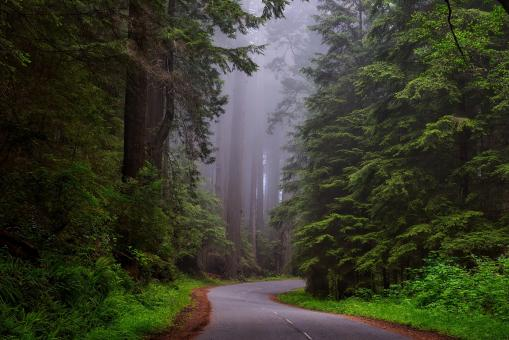 Free Stock Photo of Redwood National Park