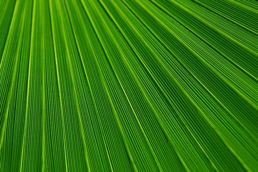 Free Stock Photo of Green Field Texture