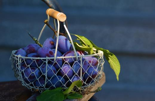 Free Stock Photo of Plums in the Basket