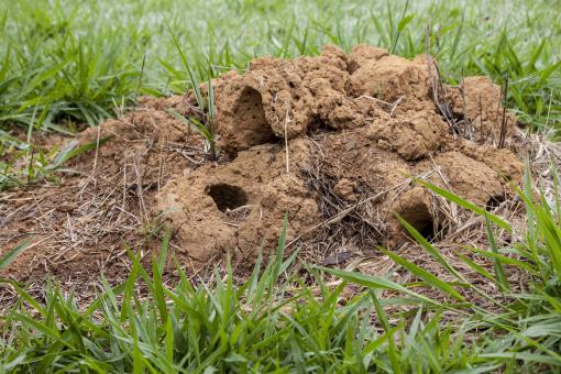 Free Stock Photo of Ant hill
