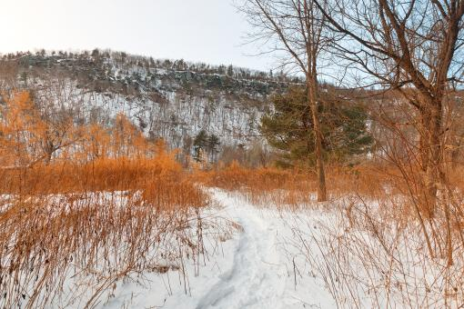 Free Stock Photo of Winter McDade Trail - HDR