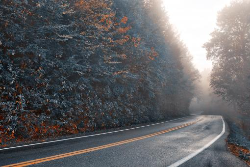 Free Stock Photo of Slick Mist Forest Road - Autumn Blues HDR