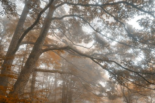 Free Stock Photo of Misty Forest Branchscape - Sepia Euphoria HDR