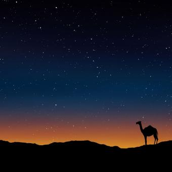 Free Stock Photo of Camel in the Desert