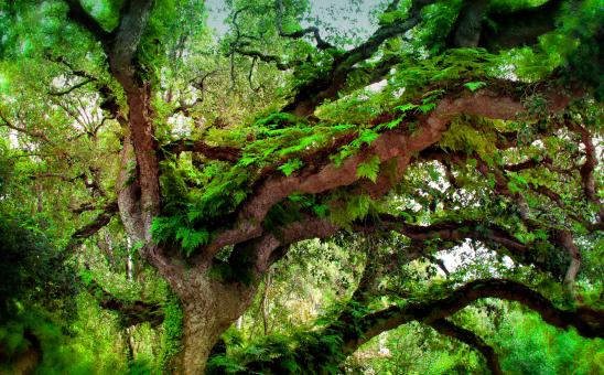 Free Stock Photo of  Deep Forest - Ferns Growing on Temperate Rainforest Tree
