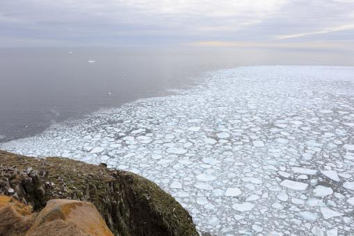Free Stock Photo of Ocean Ice at Cape St. Marys