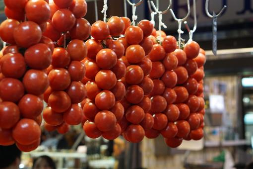 Free Stock Photo of Hanging Tomatoes
