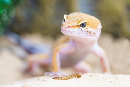 Free Stock Photo of Little Gecko