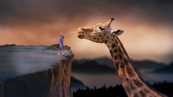 Free Stock Photo of Feeding the Giraffe