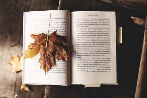 Free Stock Photo of Fallen Leaf on the Book