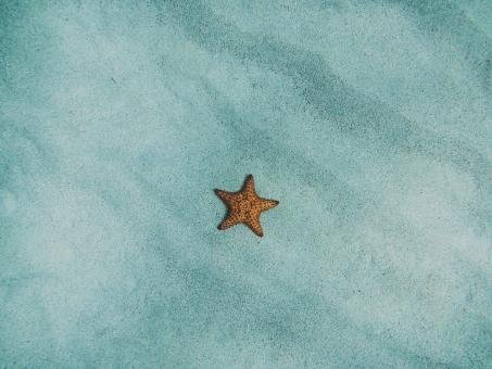 Free Stock Photo of Lonely Starfish