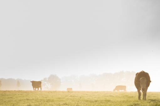 Free Stock Photo of Cattle Farm